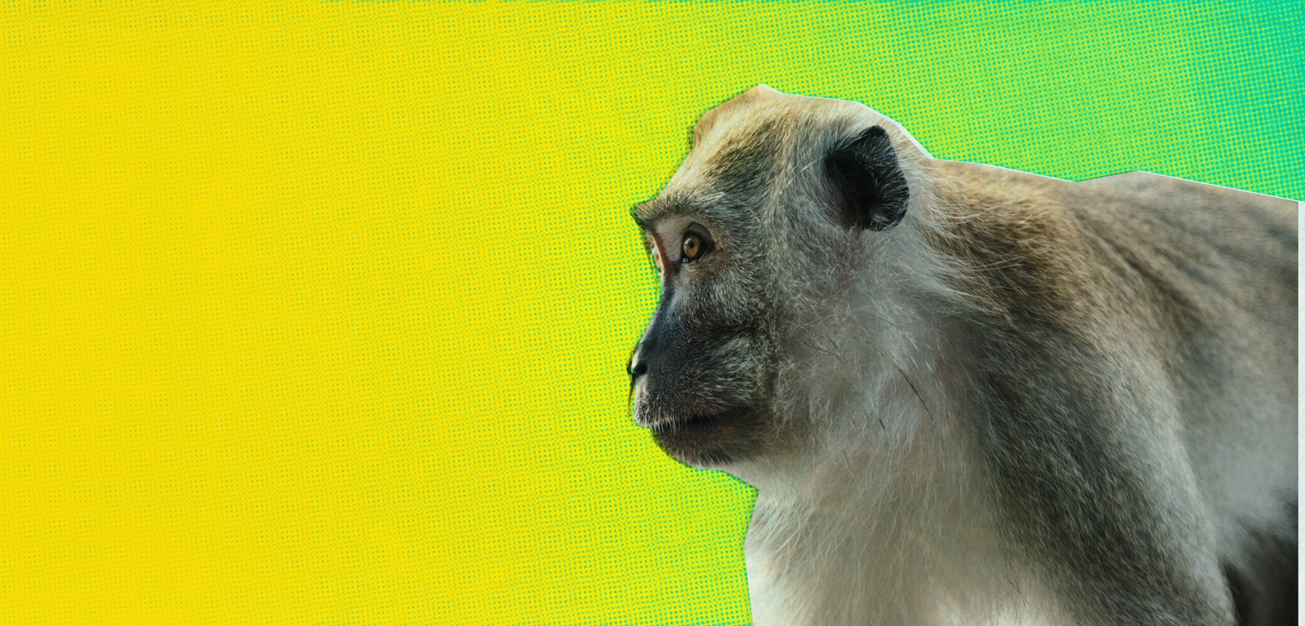 Monkey profile image