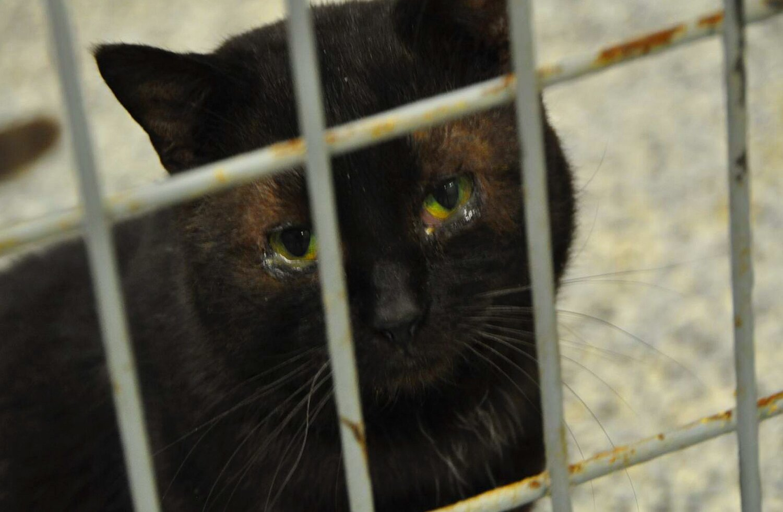 A black cat—named