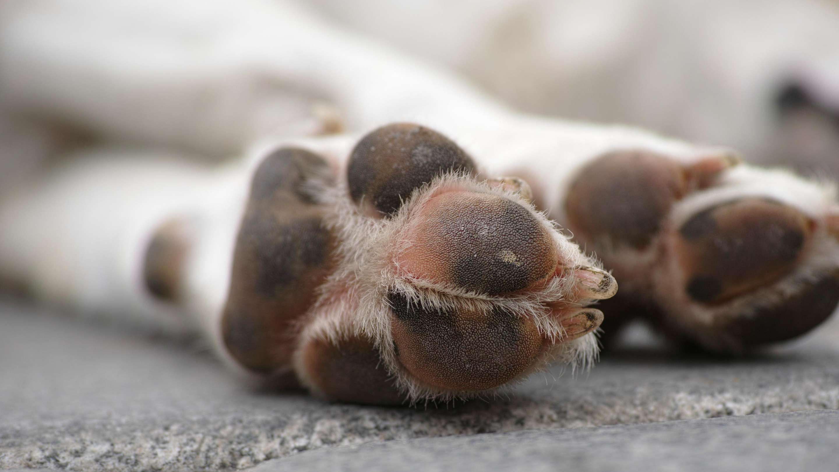 The underside of a dog's paw