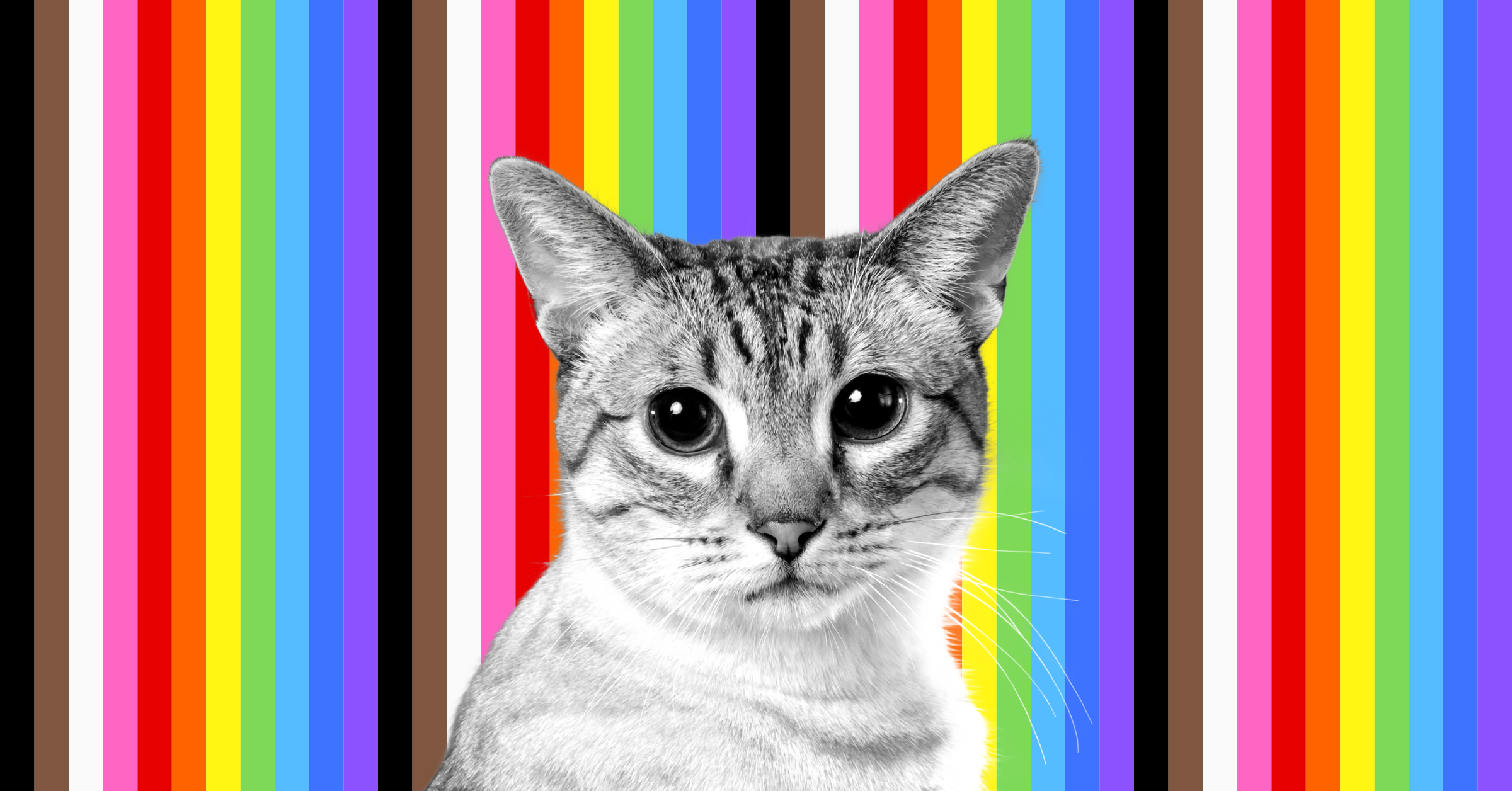In front of a striped rainbow backdrop, a cat peers at you, the reader