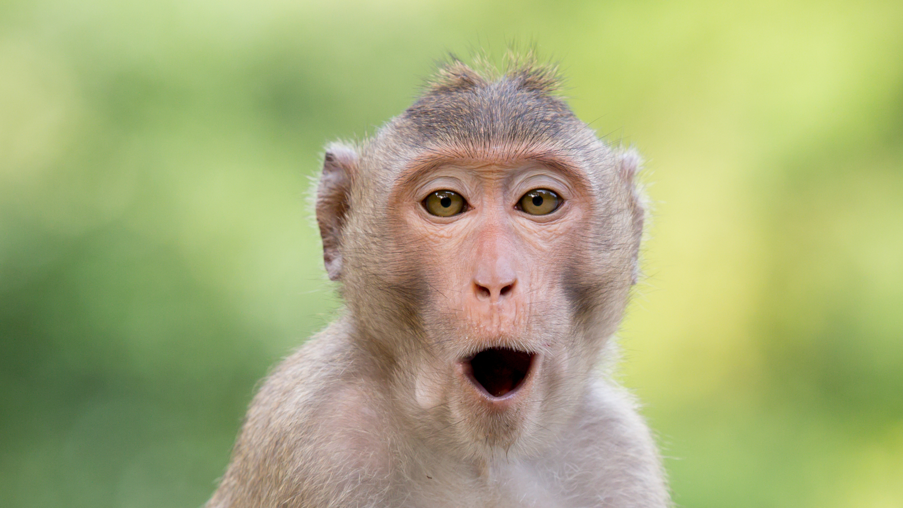 Image of a macaque monkey, open-mouthed and wide-eyed, against a lush green background