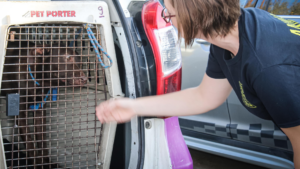 A rescued dog in a pet carrier