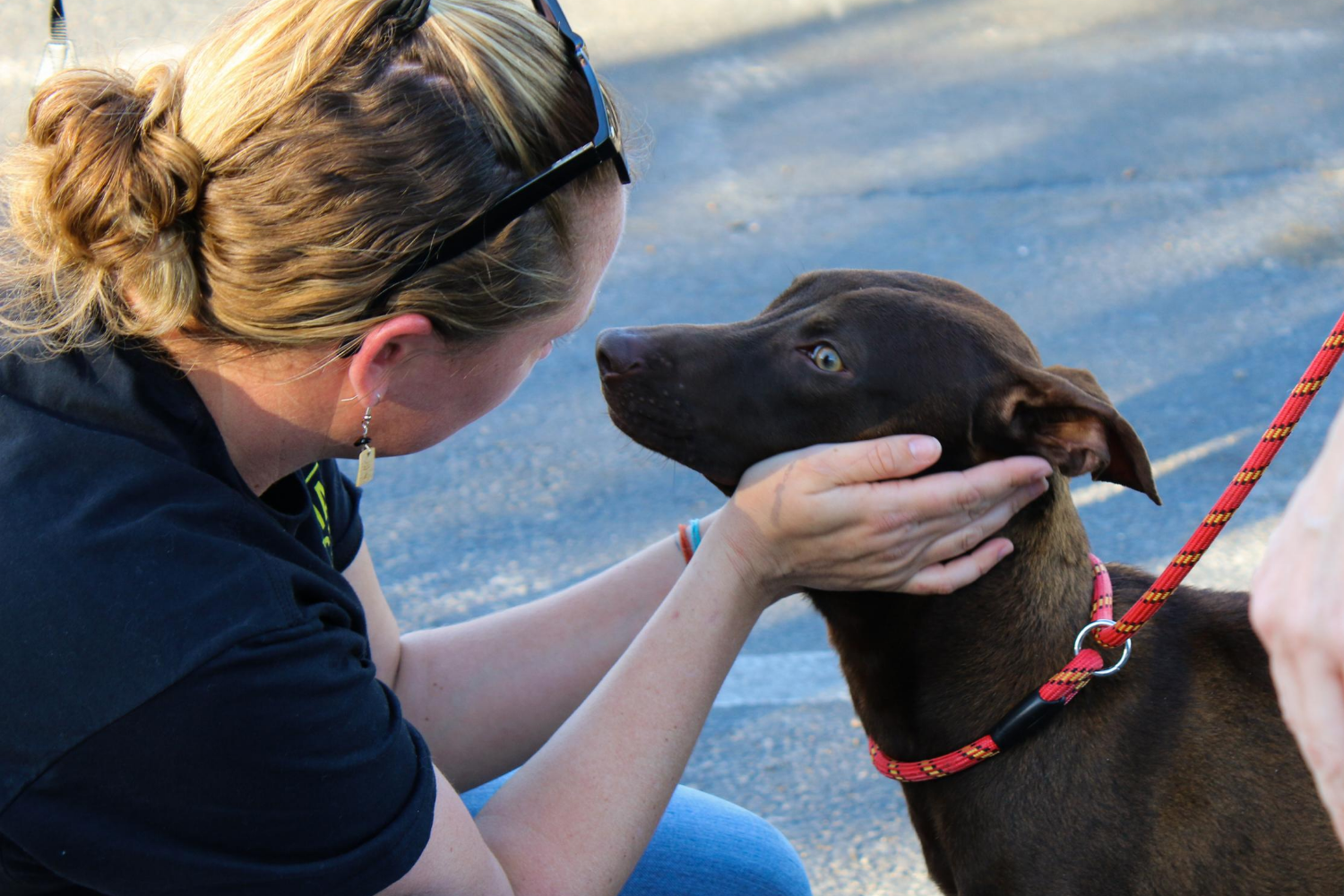 A woman cups her hands around the face of a brown dog