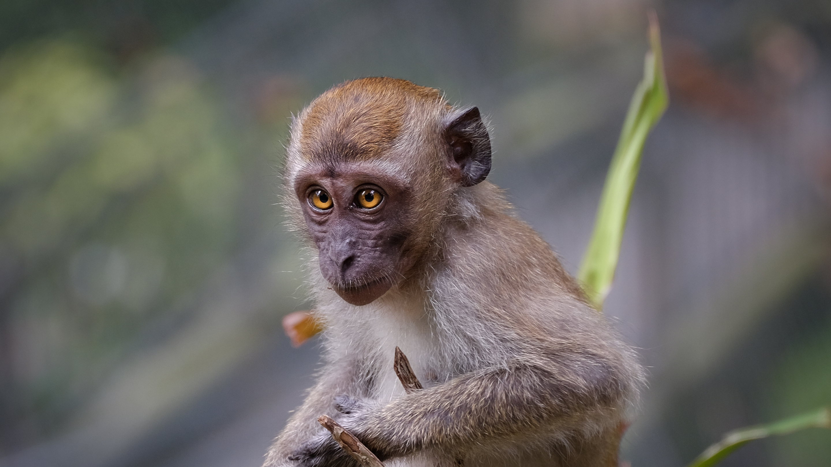 A macaque sits among greenery