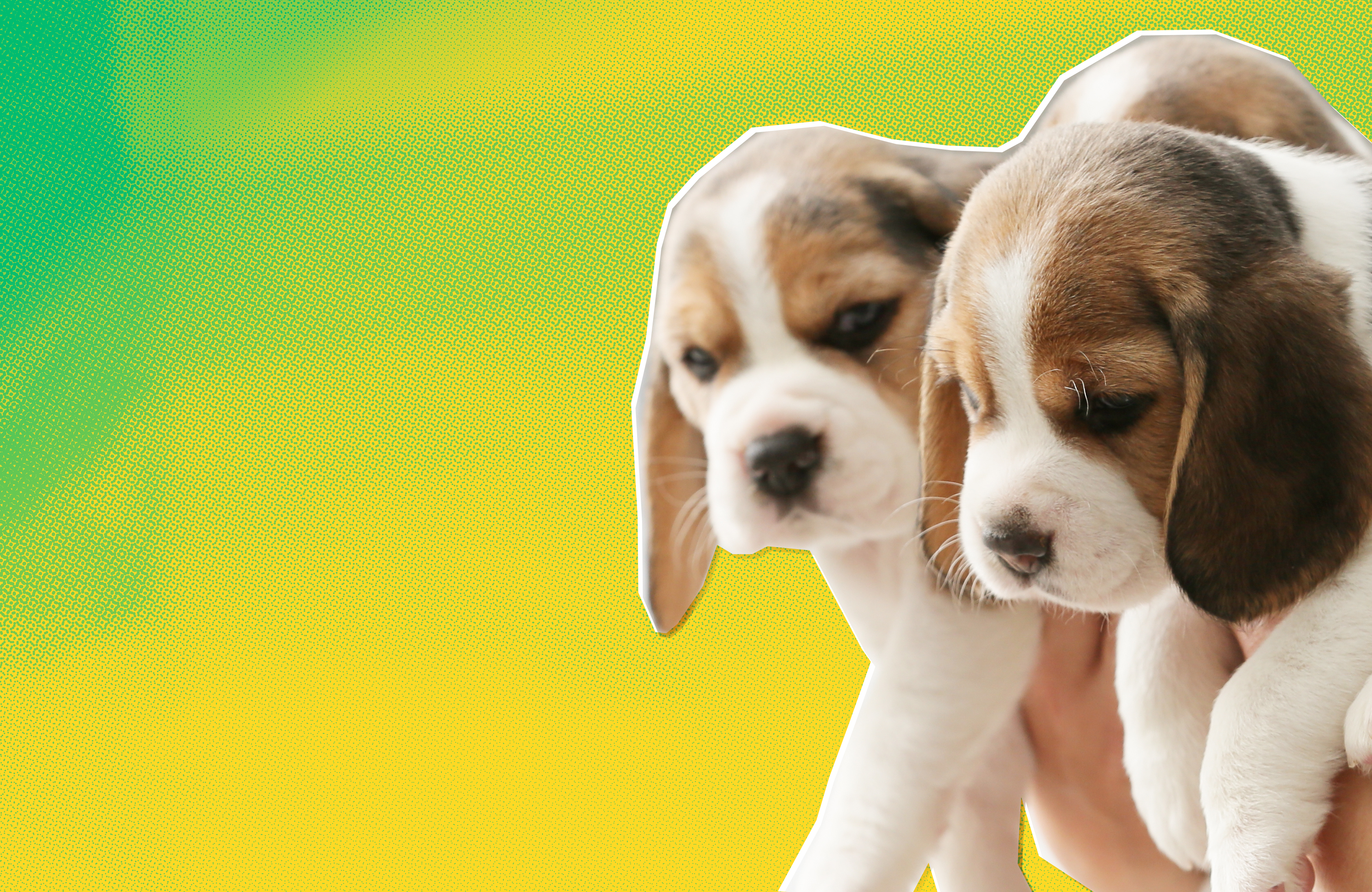 Beagle puppies silhouetted against a stylized green and yellow background