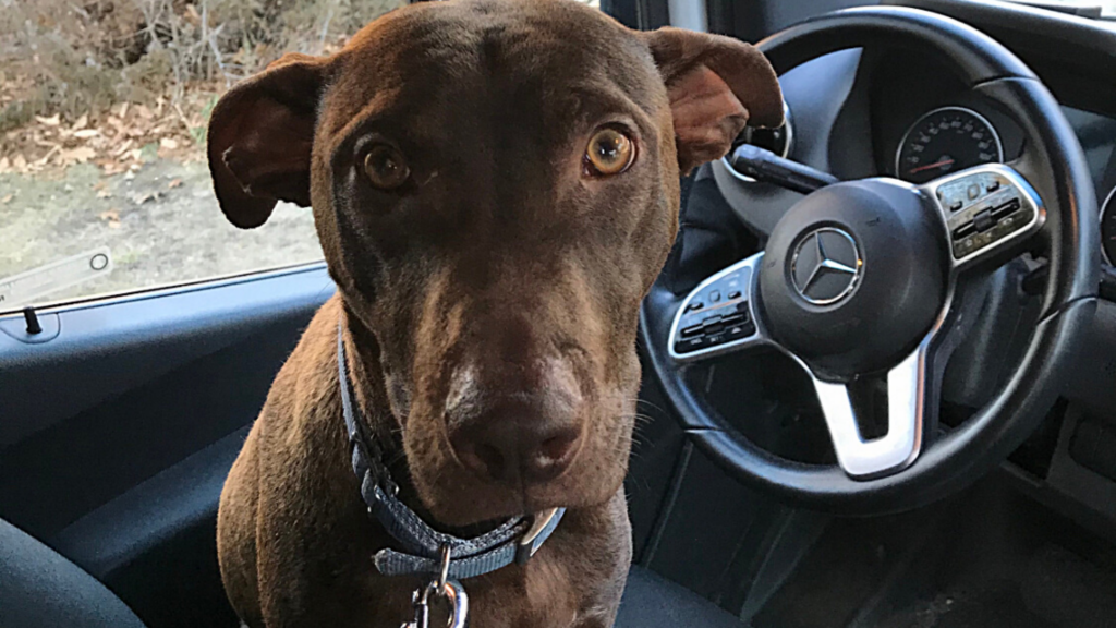 Cooper sits in the driver's seat of Jodi's parked car.
