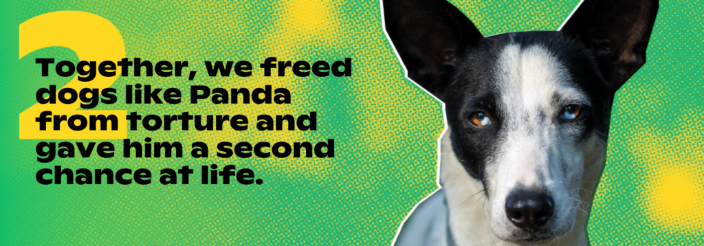 2. Together, we freed dogs like Panda from torture and gave him a second chance at life.