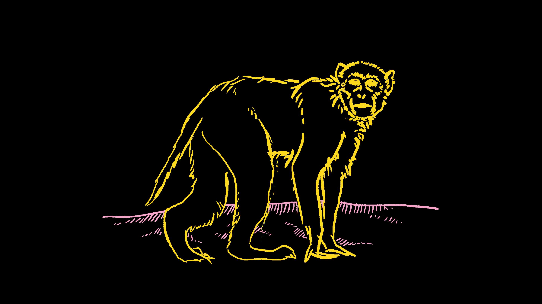 Image: A loose sketch of a macaque