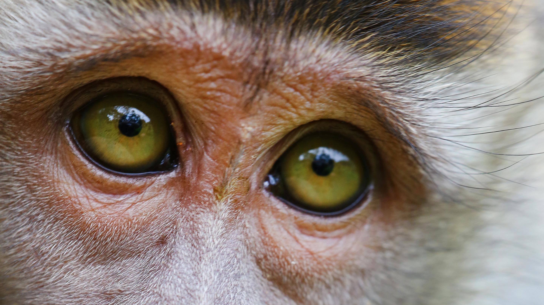 A monkey's amber eyes peer upward