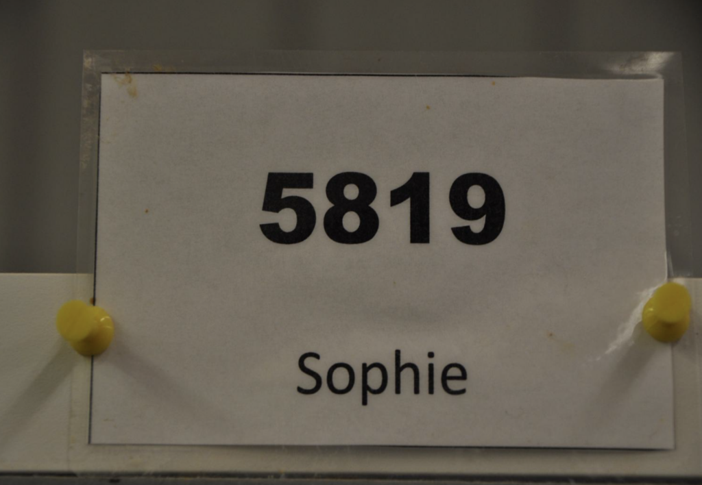 """A sign on Sophie's cage at Riner & Associates indicates her """"real"""" name is """"5819"""""""
