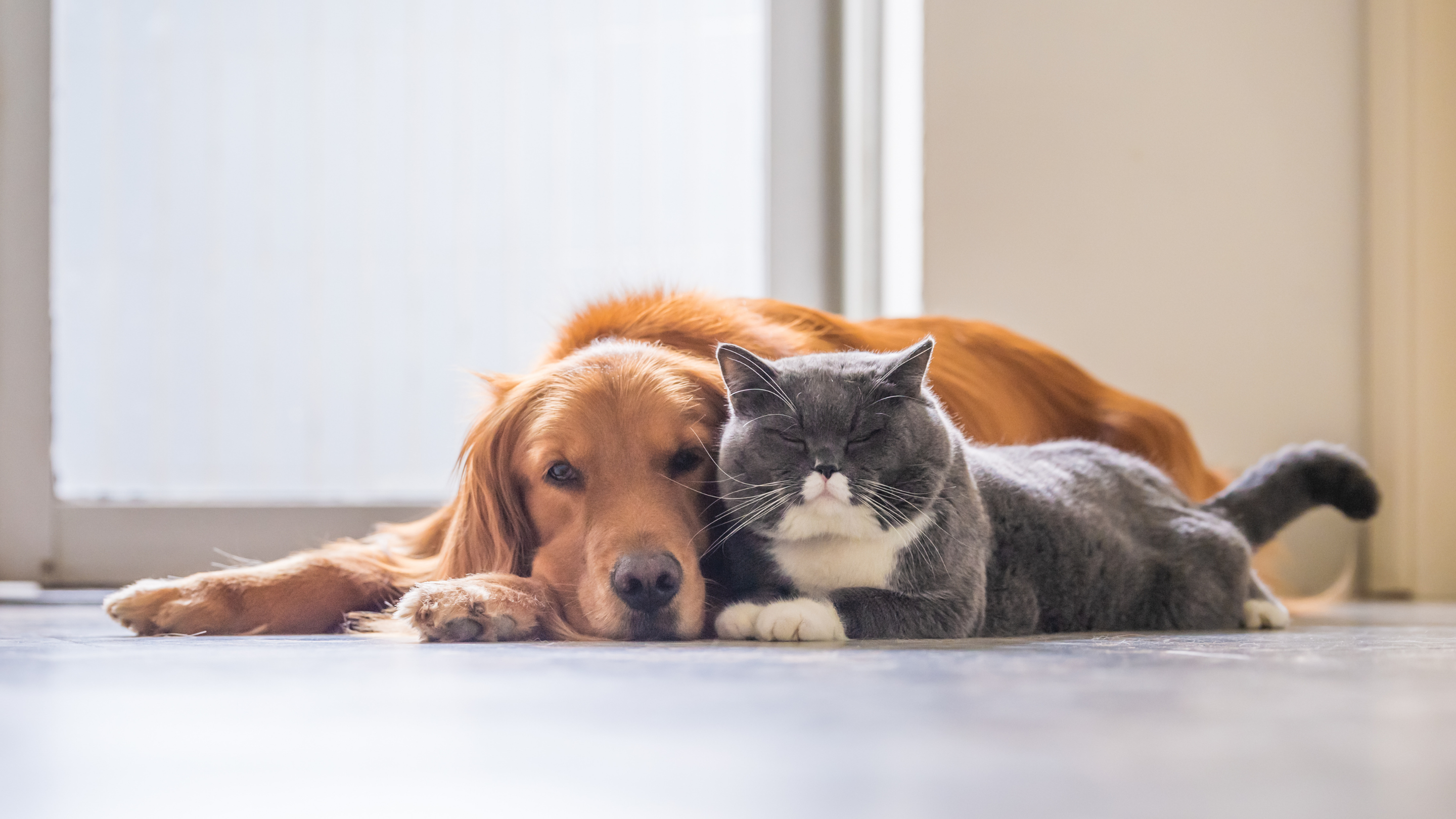 A dog and cat snuggle together in a sunny room